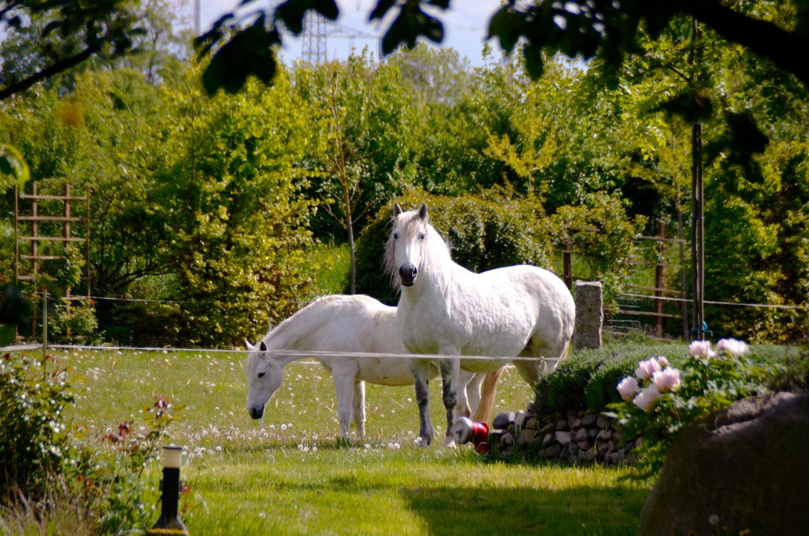 Pferde beim Grasen